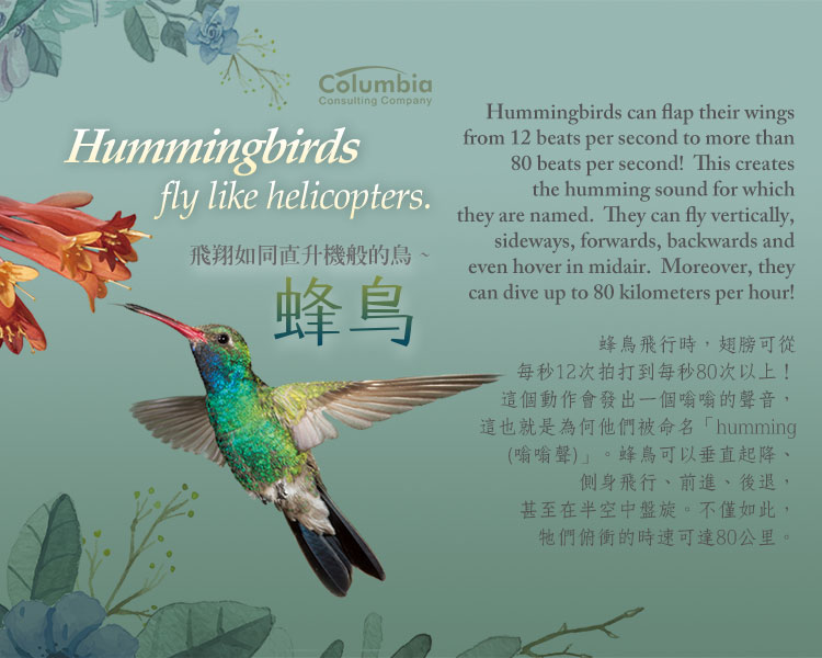 飛翔如同直升機般的鳥 Hummingbirds Fly Like Helicopters